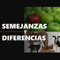 Dinámica Las Semejanzas y Diferencias